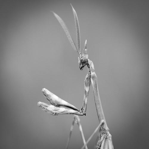 diablo by Patatitphoto