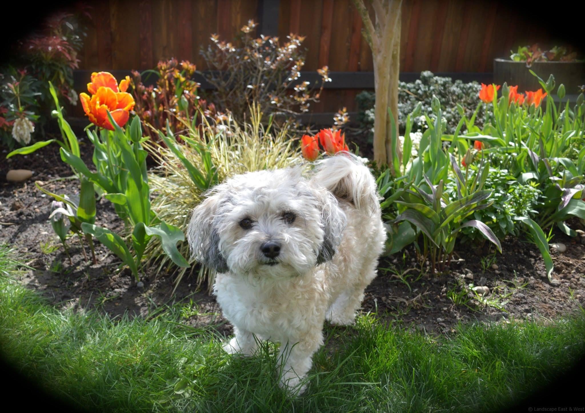 Pet-friendly Portland Landscaping Designs