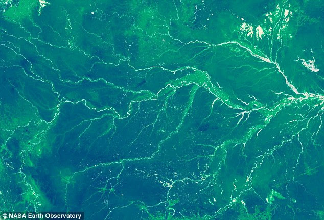 Nasa satellites monitor changes in rainforests like the Amazon (pictured from above) to estimate carbon dioxide uptake. In total, experts estimate that forests and other vegetation absorb around 2.7 billion tonnes of carbon dioxide, about 30 per cent of that emitted by humans