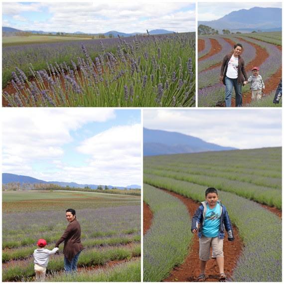 1-Tas lavender7