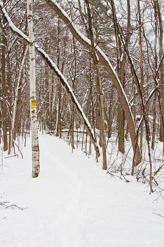 a snow-covered trail
