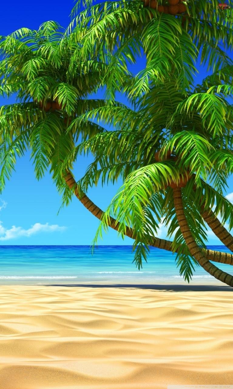 Palm Trees Ultra Hd Desktop Background Wallpaper For Widescreen