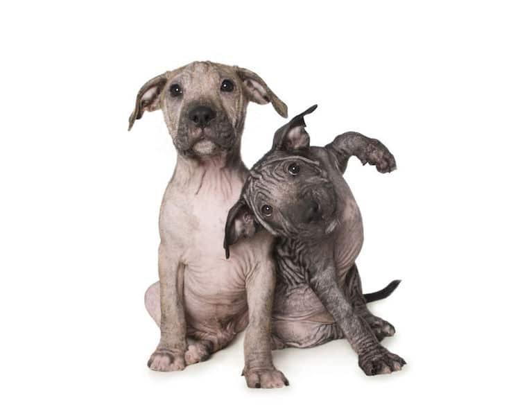 Alex Cearns perros minusvalidos 9