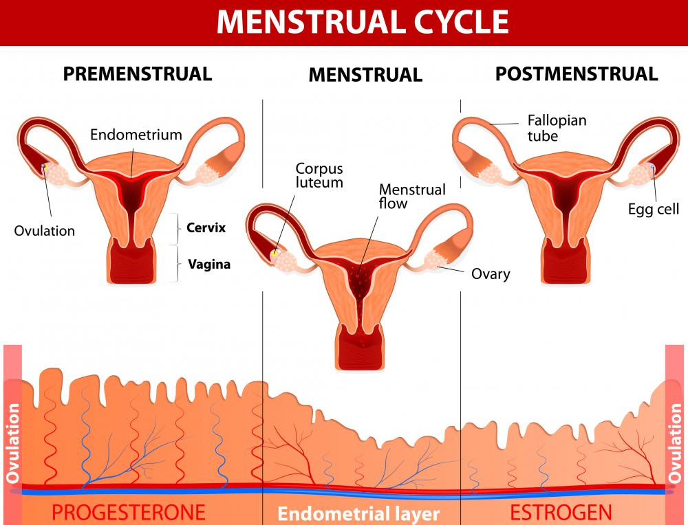 Image result for What Is Menstruation?