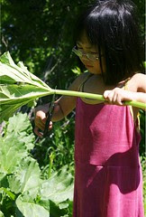 Olivia Cutting Rhubarb