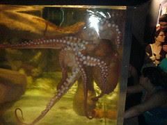 Giant octupus