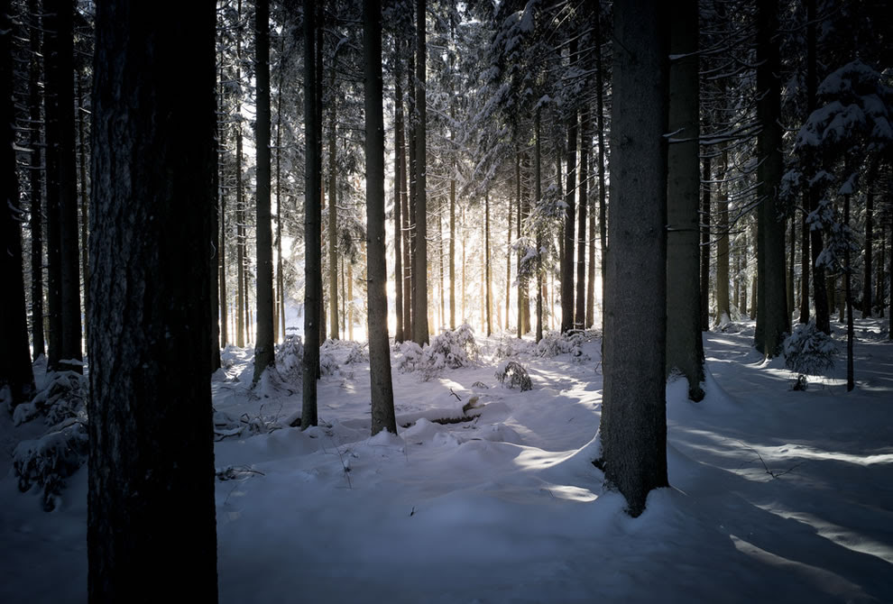 light through the trees at Black Forest