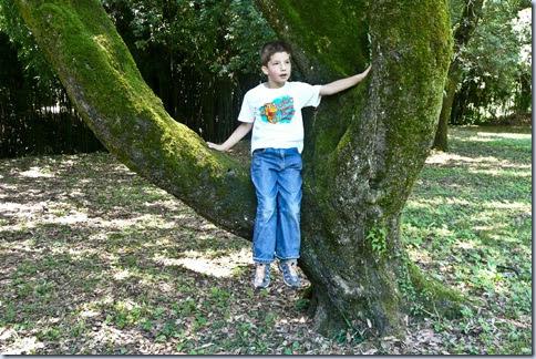 74 Simon na drevesu