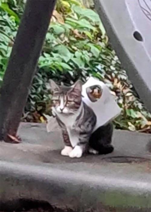 Una mujer se apiada de una gatita que estaba en la calle atrapada entre restos de plástico