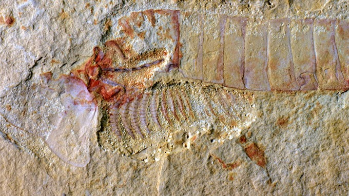 Ancient Brains: Inside the Extraordinary Preservation of a 310-Million-Year-Old NervousSystem