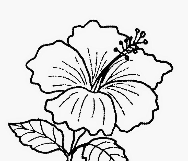 mewarnai gambar bunga kertas