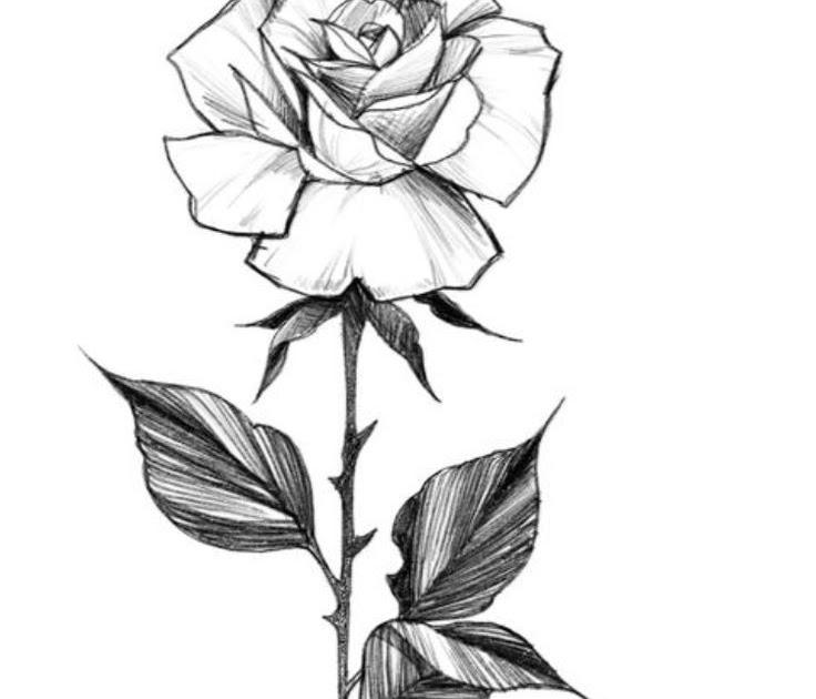rosen malvorlagen xyz  aglhk