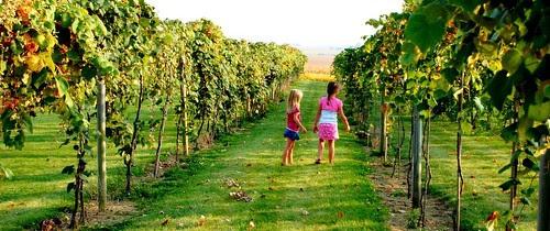 Mackinaw Vineyard 2