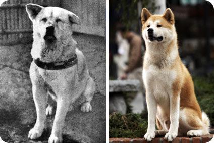 A gauche, le véritable Hachiko. A droite, Hatchi sa doublure US