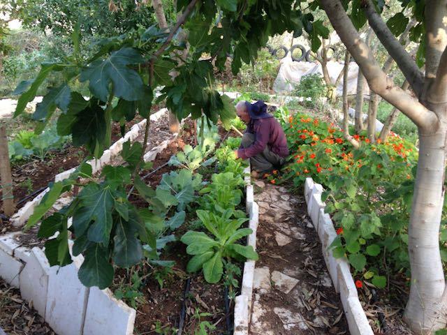 palestinian-permaculture-farm-tom-blanx