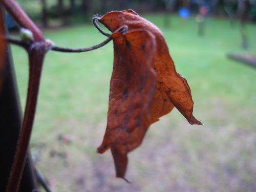 The Dead Leaves of Winter