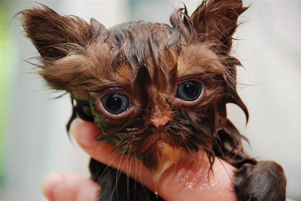 Fotografias engraçadas de gatos tomando banho 18