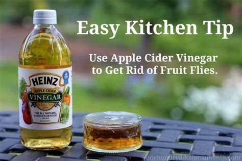 Get rid of fruit flies with vinegar   Money Saving Mom®