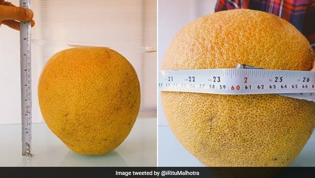 India's Largest Orange By Circumference Found In Nagpur Farm. See Viral Twitter Pic