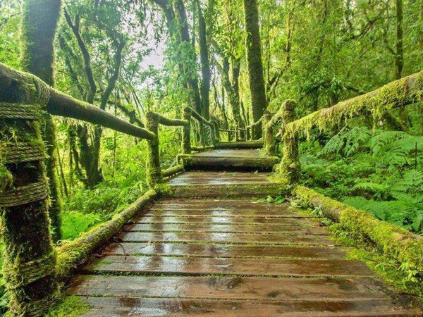 Image result for mossy forest cameron highland