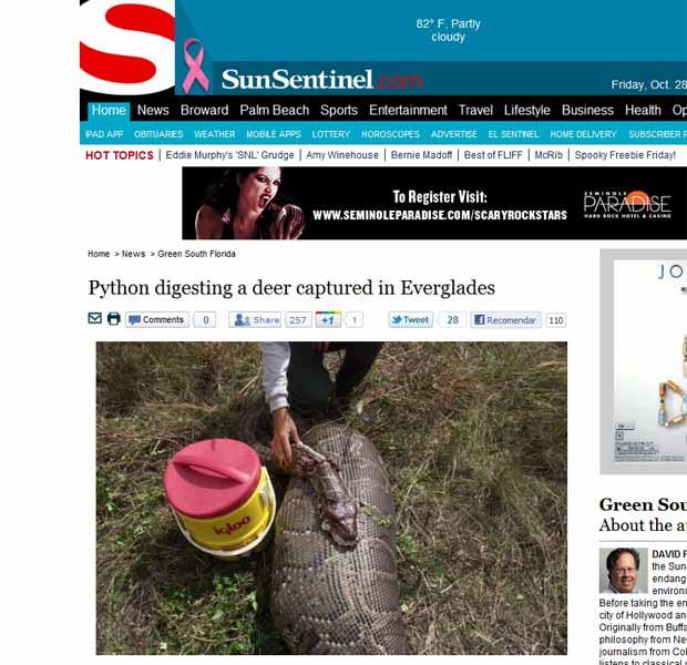 Imagem feita pelas autoridades e publicada na imprensa local mostra a cobra que engoliu o veado (Foto: Reprodução)