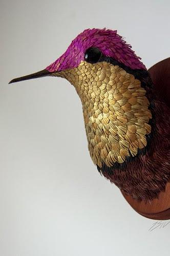 firery-topaz-hummingbird-José-Suris