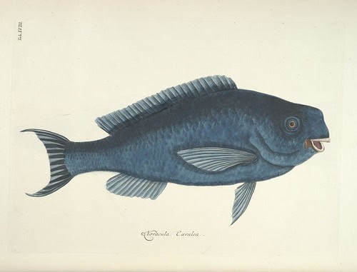 Mark Catesby - Natural History of Carolina, Florida and the Bahama Islands (fish)