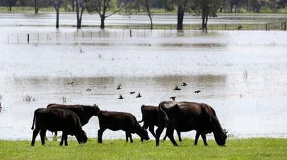 На востоке Австралии проводится эвакуация из-за наводнений