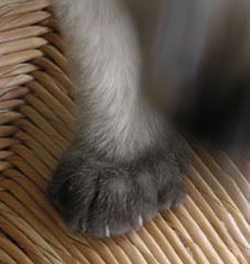 Six Toes