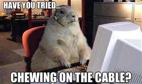25 hilarious animal memes
