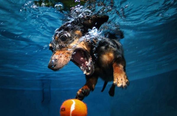Perierga.gr - Σκύλοι σε... υποβρύχιες δράσεις!