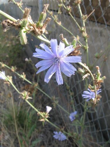 broadway_flower