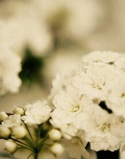 Bridal Veil Blooms Again 11x14