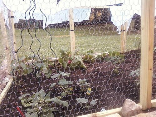 evil deer force vegtables to be caged