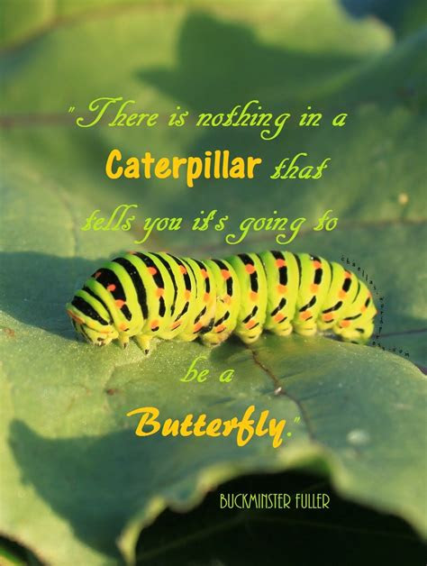 A Bugs Life Quotes Butterfly