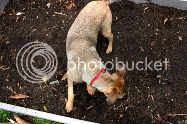 Organic Garden Helper