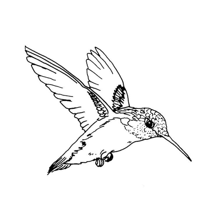 119 Dessins De Coloriage Oiseau à Imprimer Sur Laguerchecom Page 10