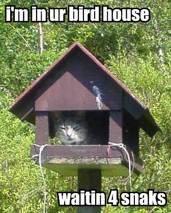 im-in-ur-bird-house-waitin-4-snaks