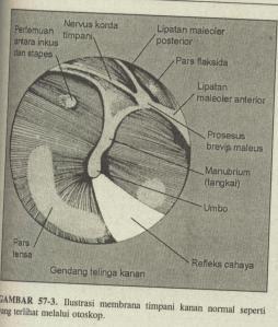 telinga-tengah