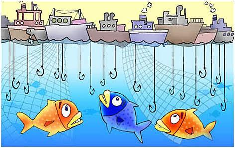 overfish_img1_col2b_350394