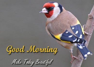 Cute Good Morning Images With Birds Free Download Good Morning
