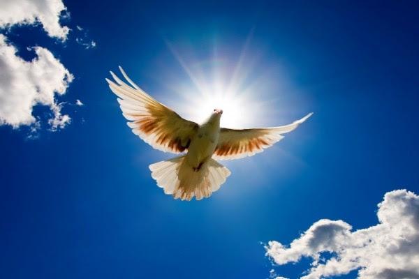 Una Paloma Blanca Volando Bajo Un Cielo Azul 6241