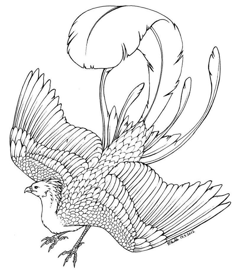 530 Top Coloring Pages Phoenix Bird , Free HD Download
