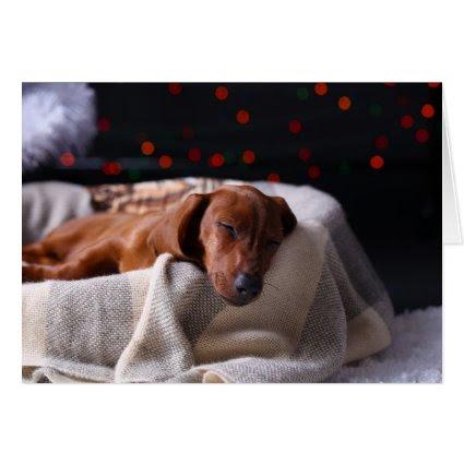 Little Cute Dachshund Puppy On Christmas Cards