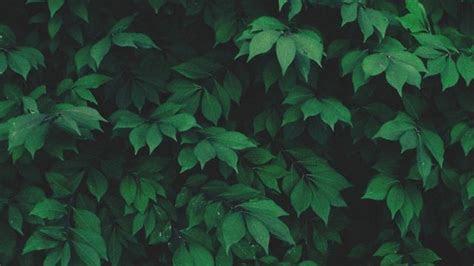 scottish nature tumblr sins pinterest plants