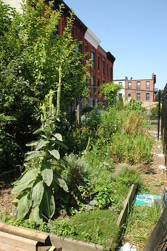 Prospect Heights Community Farm