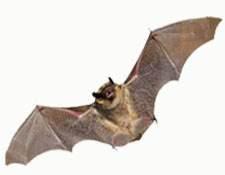 Bat Control in Bergen County