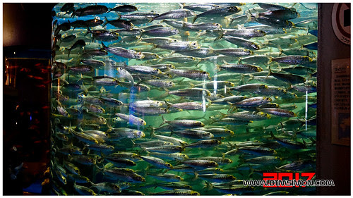品川水族館37.jpg