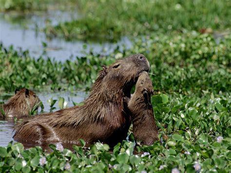 Foto Animali della foresta pluviale   3 di 11   National Geographic