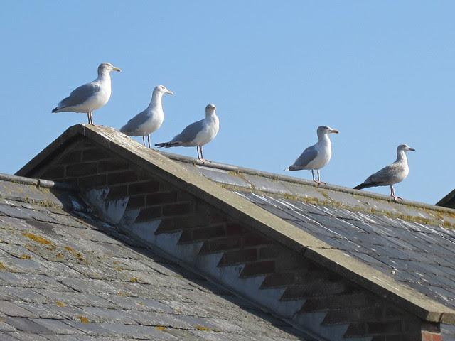 Aldeburgh and Southwold 1st October 2011 007